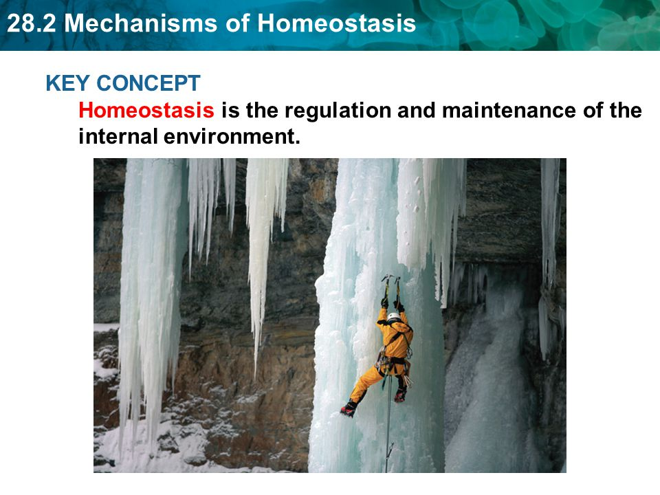 28.2 Mechanisms of Homeostasis Disease Stress Rest Lifestyle (drinking, smoking, diet) Injury Illness (fever, infection) Dehydration/Starvation Please make a list of external or internal factors that would affect your body's homeostasis.