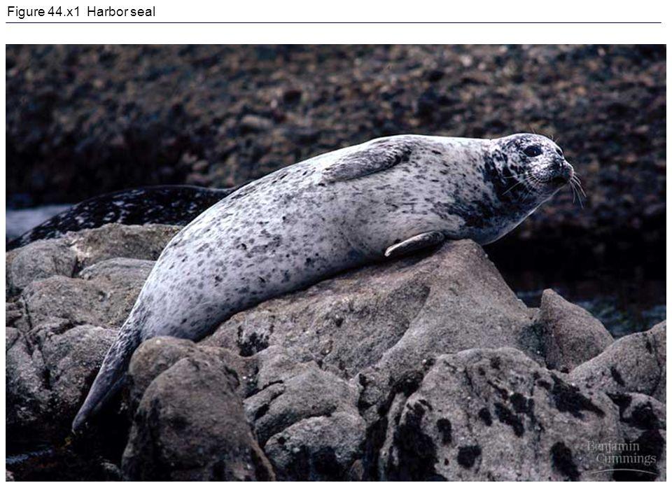 Figure 44.x1 Harbor seal