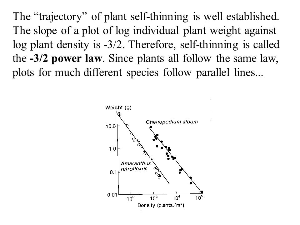 """The """"trajectory"""" of plant self-thinning is well established. The slope of a plot of log individual plant weight against log plant density is -3/2. The"""