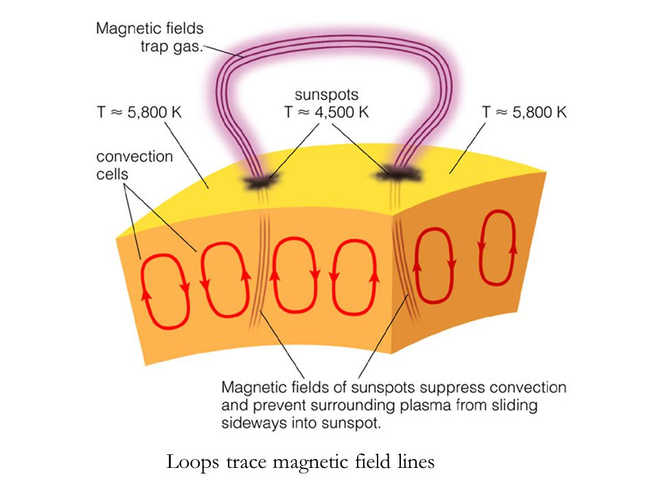 Loops trace magnetic field lines