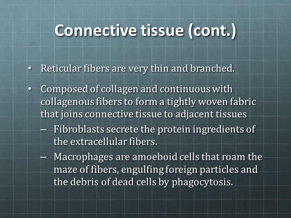 Connective tissue (cont.) Reticular fibers are very thin and branched. Reticular fibers are very thin and branched. Composed of collagen and continuou