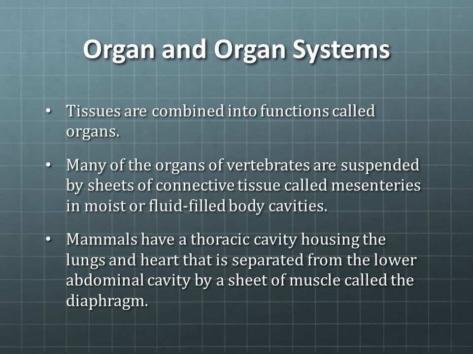 Organ and Organ Systems Tissues are combined into functions called organs. Tissues are combined into functions called organs. Many of the organs of ve