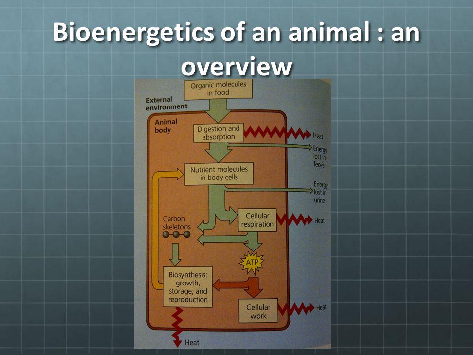 Bioenergetics of an animal : an overview
