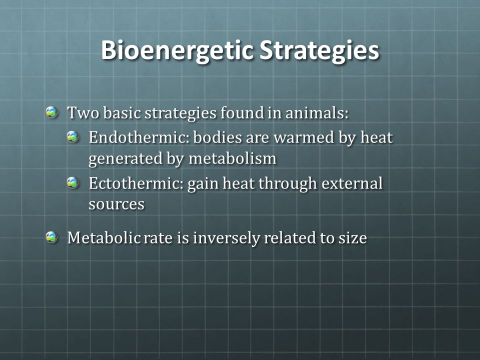 Bioenergetic Strategies Two basic strategies found in animals: Endothermic: bodies are warmed by heat generated by metabolism Ectothermic: gain heat t