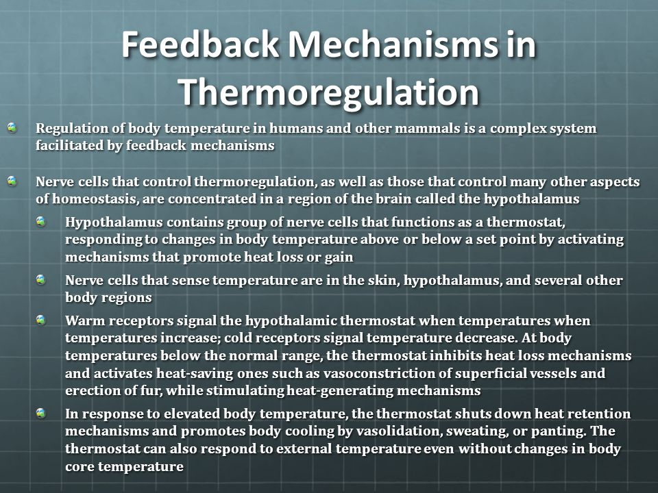 Feedback Mechanisms in Thermoregulation Regulation of body temperature in humans and other mammals is a complex system facilitated by feedback mechani