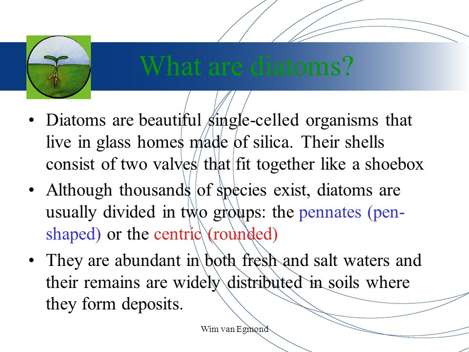 Wim van Egmond What are diatoms? Diatoms are beautiful single-celled organisms that live in glass homes made of silica. Their shells consist of two va