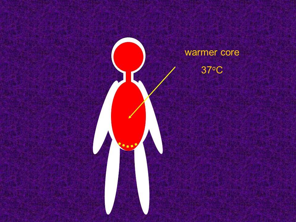 warmer core 37 o C