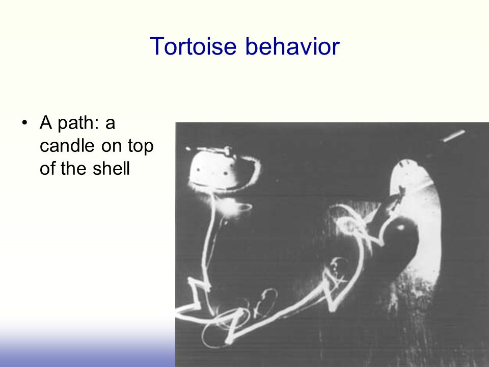 Tortoise behavior A path: a candle on top of the shell