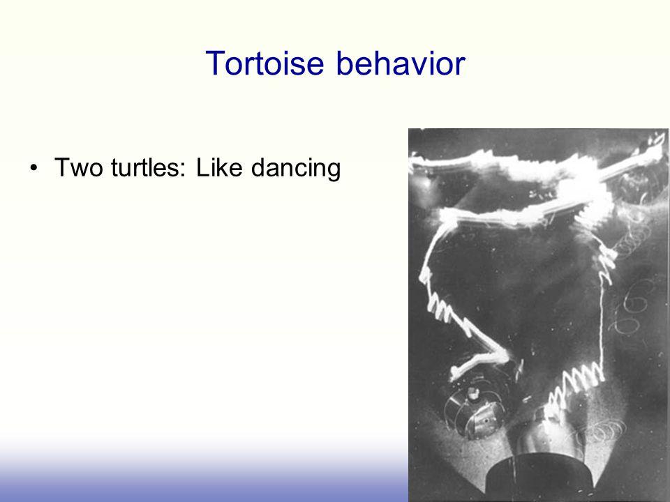 Tortoise behavior Two turtles: Like dancing