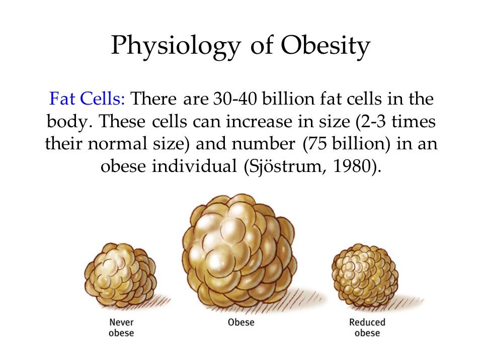 Physiology of Obesity Fat Cells: There are 30-40 billion fat cells in the body.
