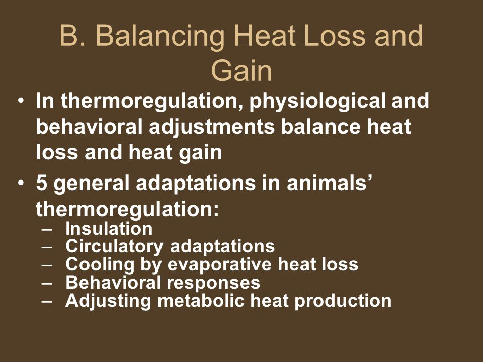 B. Balancing Heat Loss and Gain In thermoregulation, physiological and behavioral adjustments balance heat loss and heat gain 5 general adaptations in