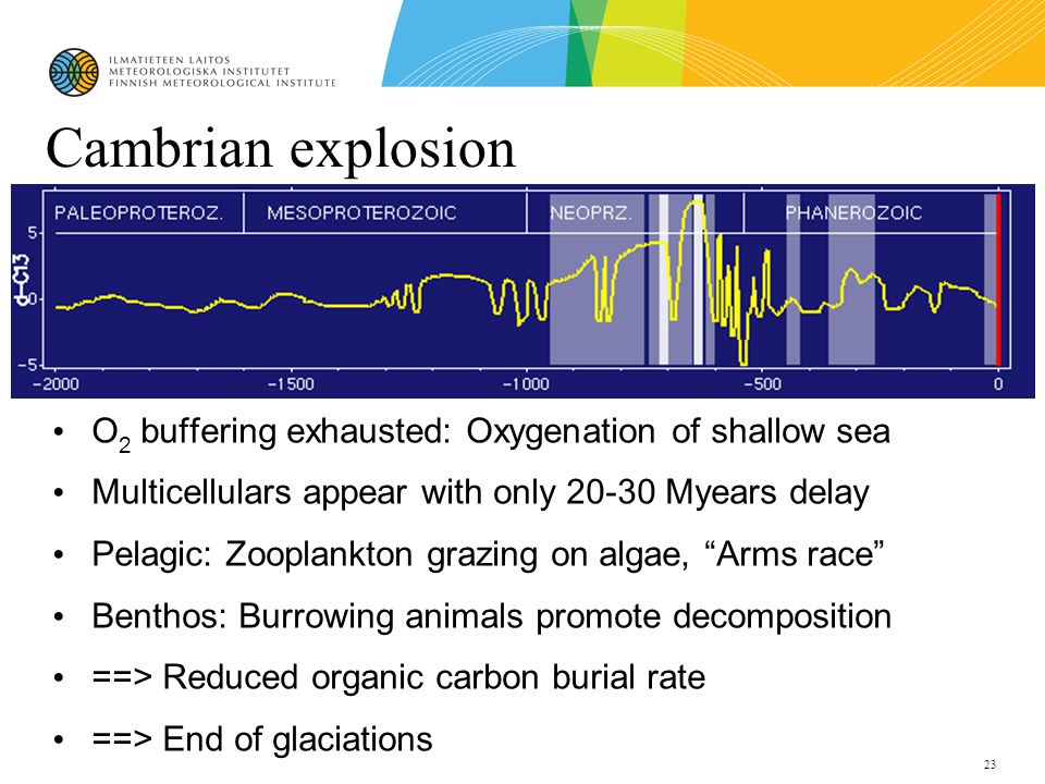 23 Cambrian explosion O 2 buffering exhausted: Oxygenation of shallow sea Multicellulars appear with only 20-30 Myears delay Pelagic: Zooplankton grazing on algae, Arms race Benthos: Burrowing animals promote decomposition ==> Reduced organic carbon burial rate ==> End of glaciations