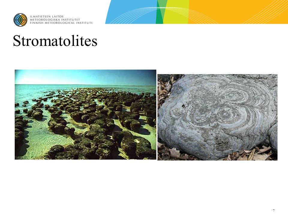 7 Stromatolites