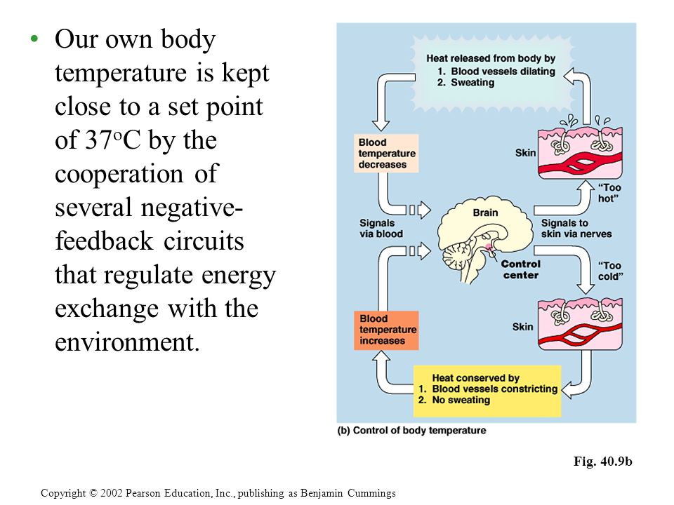 One mechanism by which humans control body temperature involves sweating as a means to dispose of metabolic heat and cool the body.