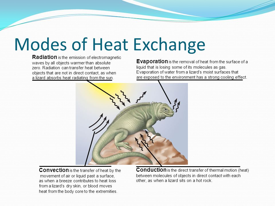 Balancing Heat Loss and Gain 1.Insulation 2. Circulatory Adaptations 3.