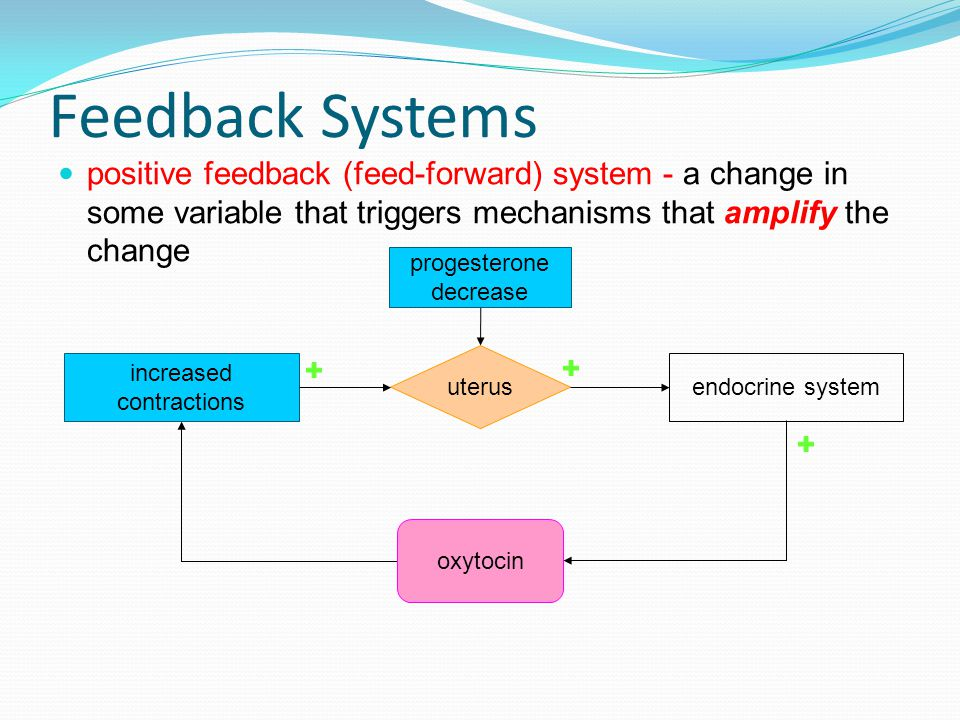 Feedback Systems positive feedback (feed-forward) system - a change in some variable that triggers mechanisms that amplify the change progesterone decrease uterus endocrine system oxytocin increased contractions