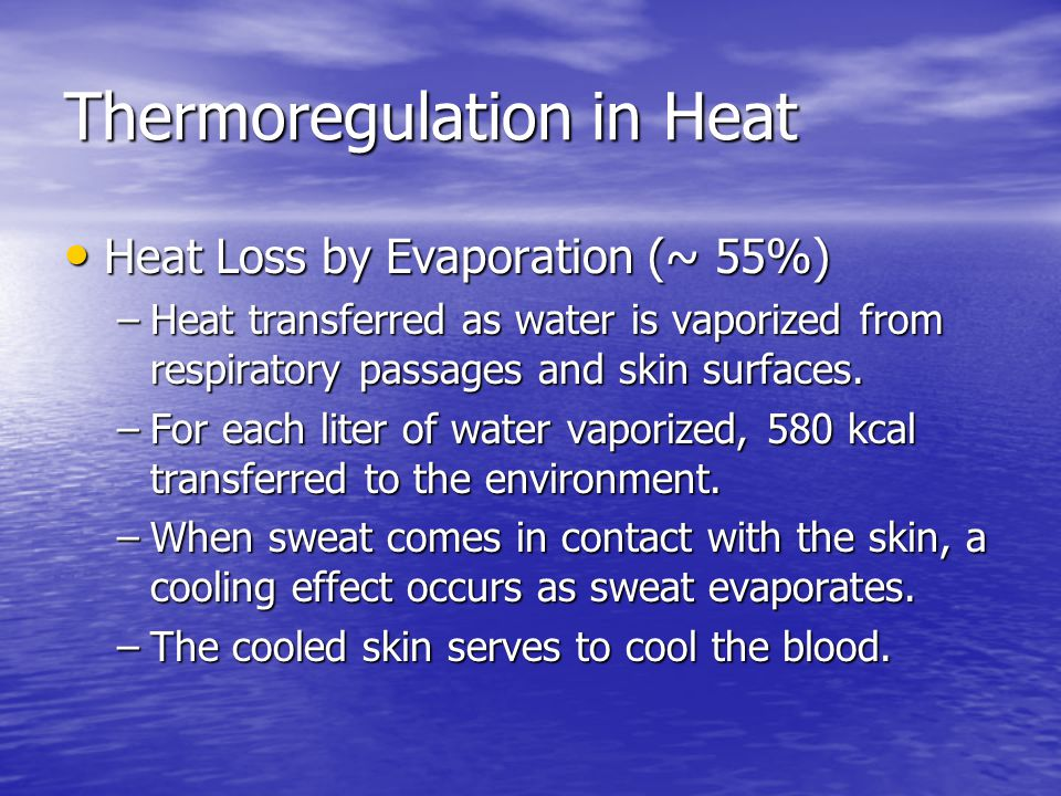 Thermoregulation in Heat Heat Loss by Evaporation (~ 55%) Heat Loss by Evaporation (~ 55%) –Heat transferred as water is vaporized from respiratory pa