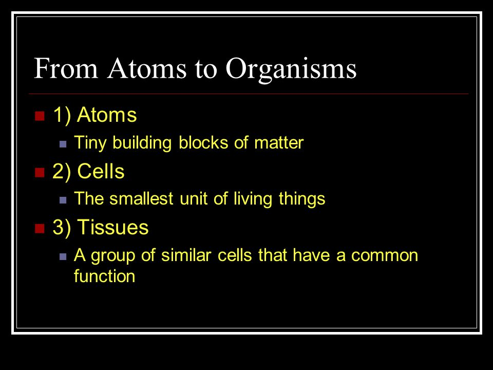 From Atoms to Organisms 1) Atoms Tiny building blocks of matter 2) Cells The smallest unit of living things 3) Tissues A group of similar cells that have a common function