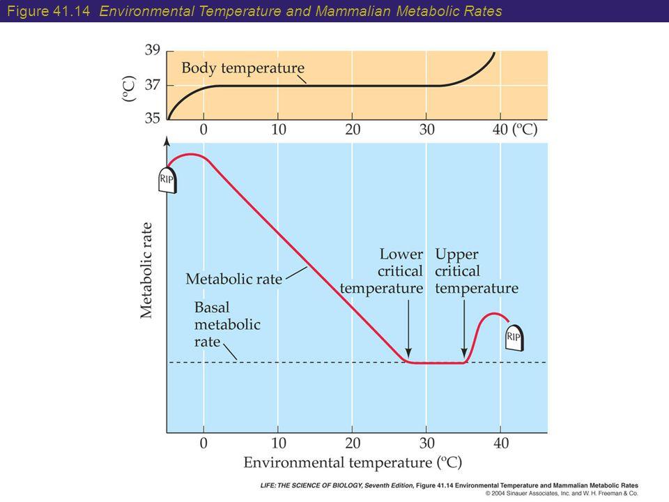 Figure 41.14 Environmental Temperature and Mammalian Metabolic Rates