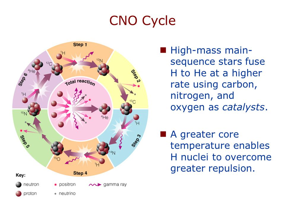 CNO Cycle High-mass main- sequence stars fuse H to He at a higher rate using carbon, nitrogen, and oxygen as catalysts. A greater core temperature ena