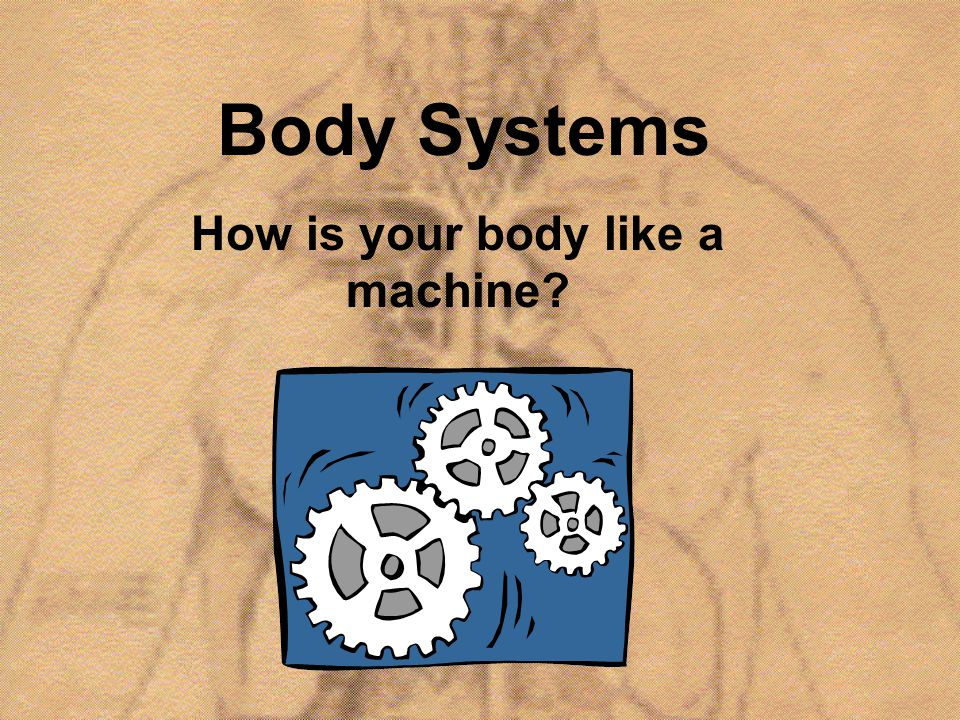 NERVOUS SYSTEM What are the functions.