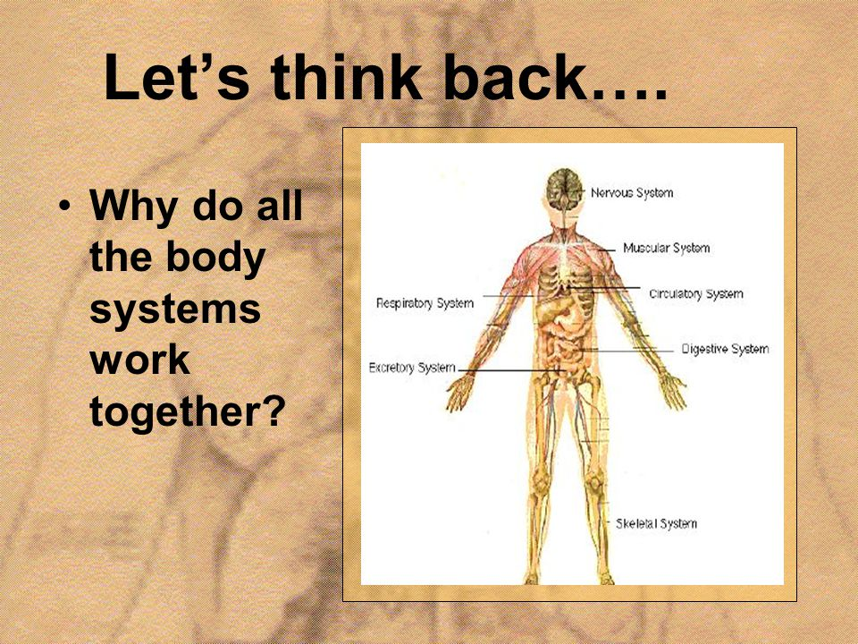 Let's think back…. Why do all the body systems work together?