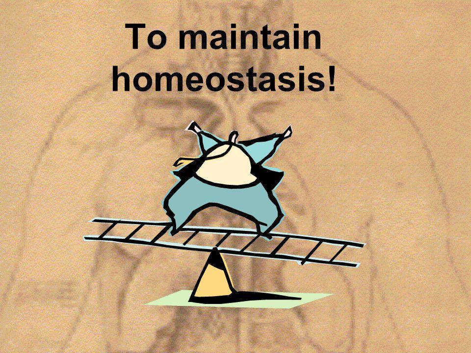 To maintain homeostasis!