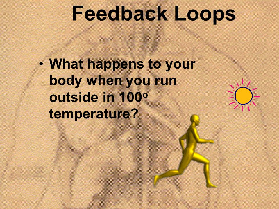Feedback Loops What happens to your body when you run outside in 100 o temperature?