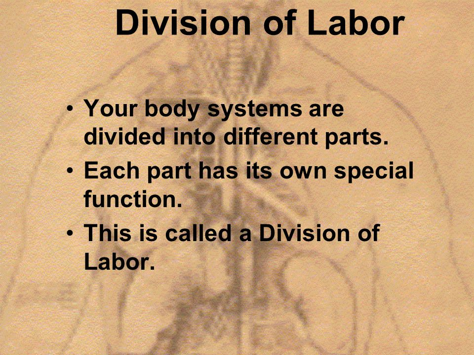 Division of Labor Your body systems are divided into different parts. Each part has its own special function. This is called a Division of Labor.