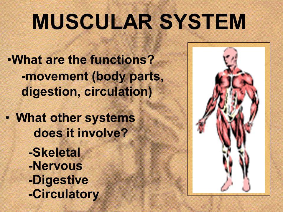 Muscle Types SKELETALSMOOTHCARDIAC
