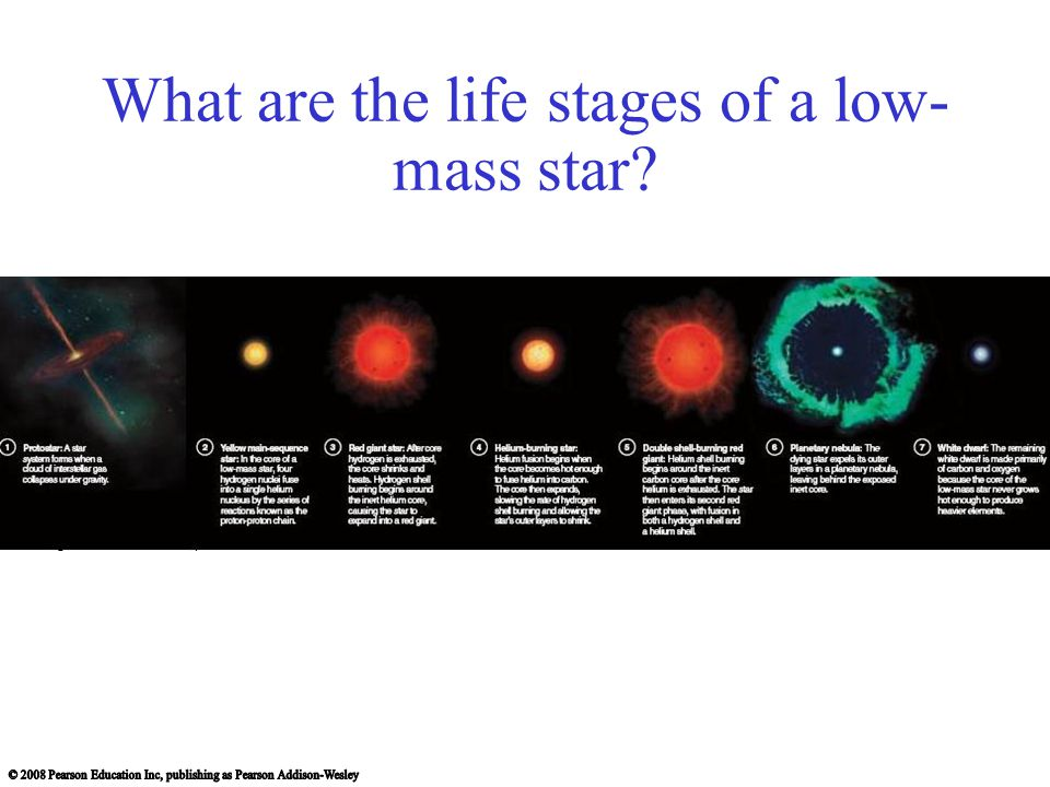 What are the life stages of a low- mass star