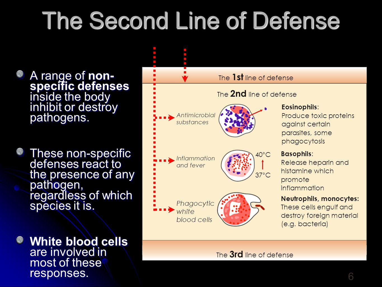 phagocytes Mast Cell - Secretes hisatmines