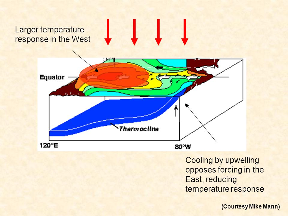 Larger temperature response in the West Cooling by upwelling opposes forcing in the East, reducing temperature response (Courtesy Mike Mann)