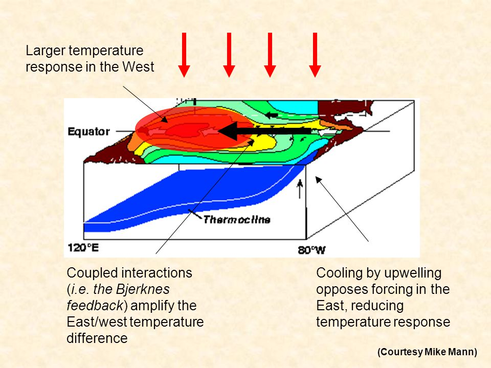 Larger temperature response in the West Cooling by upwelling opposes forcing in the East, reducing temperature response Coupled interactions (i.e.
