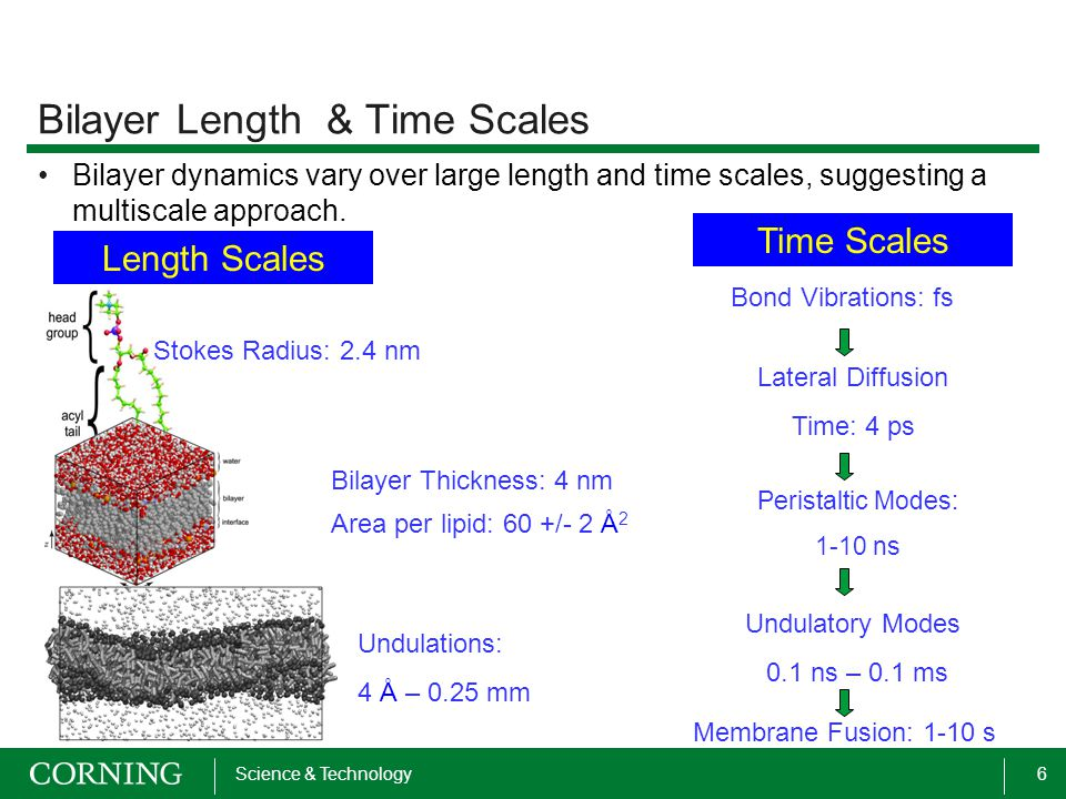 6Science & Technology Bilayer Length & Time Scales Bilayer dynamics vary over large length and time scales, suggesting a multiscale approach. Undulati