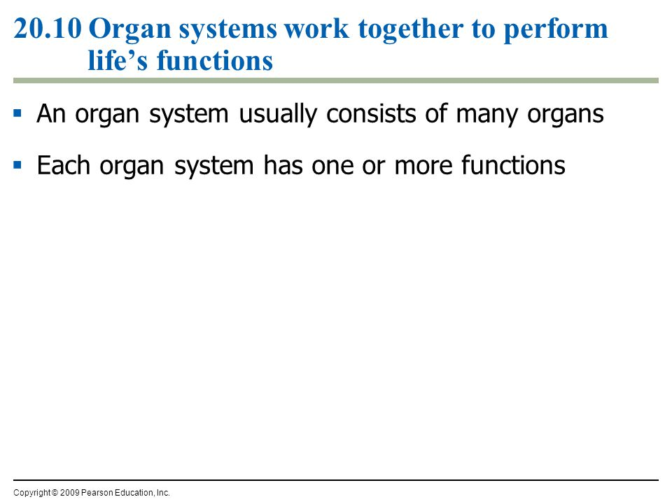 20.10 Organ systems work together to perform life's functions  An organ system usually consists of many organs  Each organ system has one or more functions Copyright © 2009 Pearson Education, Inc.