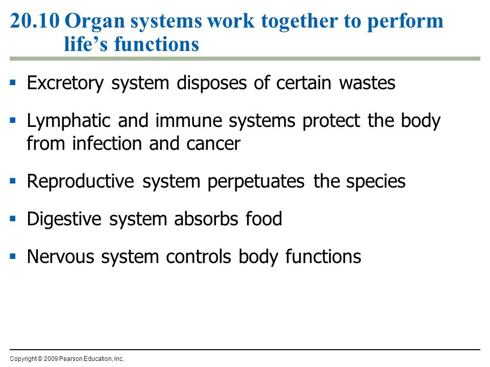  Excretory system disposes of certain wastes  Lymphatic and immune systems protect the body from infection and cancer  Reproductive system perpetuates the species  Digestive system absorbs food  Nervous system controls body functions Copyright © 2009 Pearson Education, Inc.