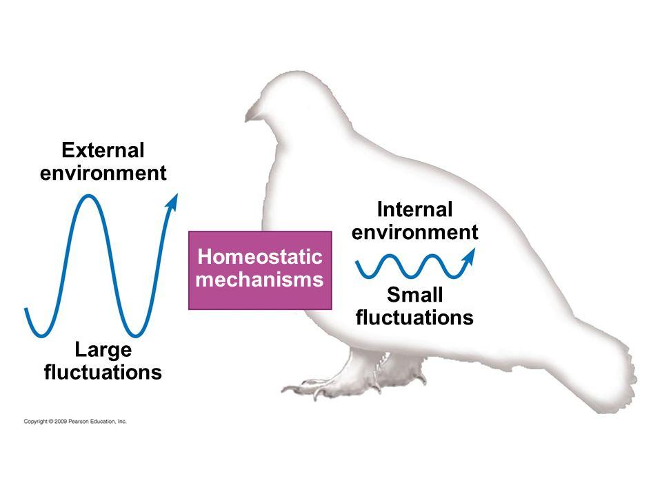 External environment Homeostatic mechanisms Internal environment Small fluctuations Large fluctuations