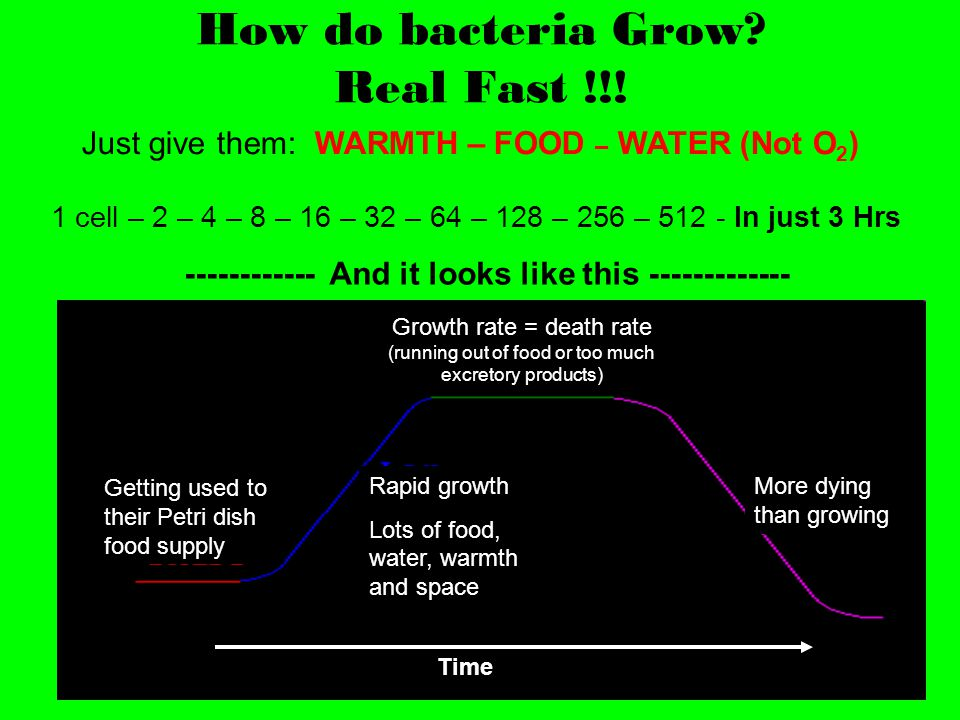 How do bacteria Grow? Real Fast !!! Rapid growth Lots of food, water, warmth and space Growth rate = death rate (running out of food or too much excre