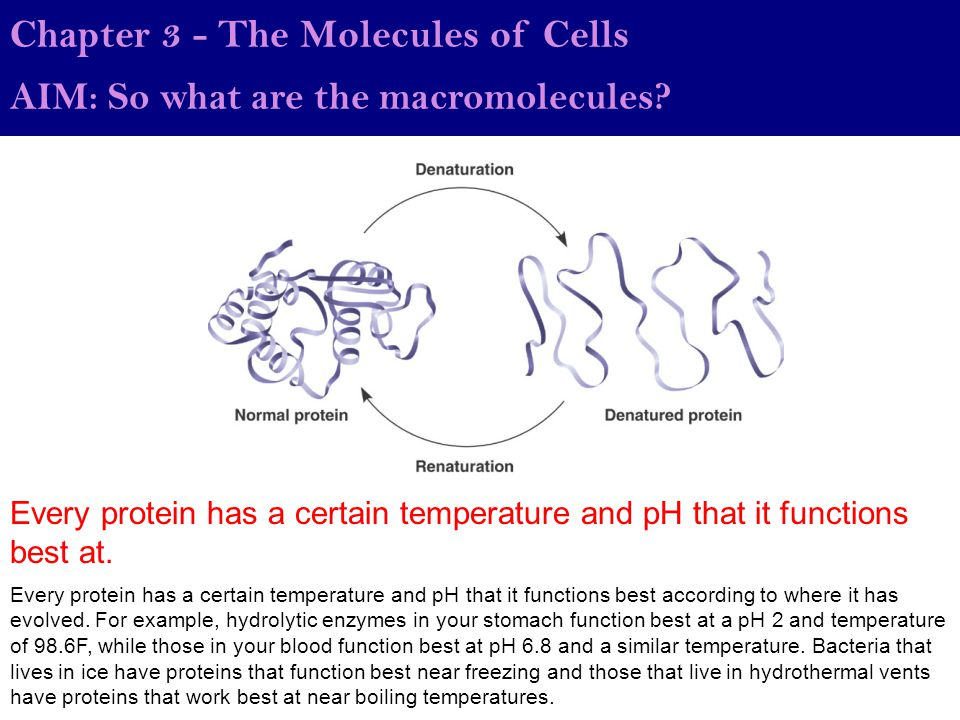 AIM: So what are the macromolecules.