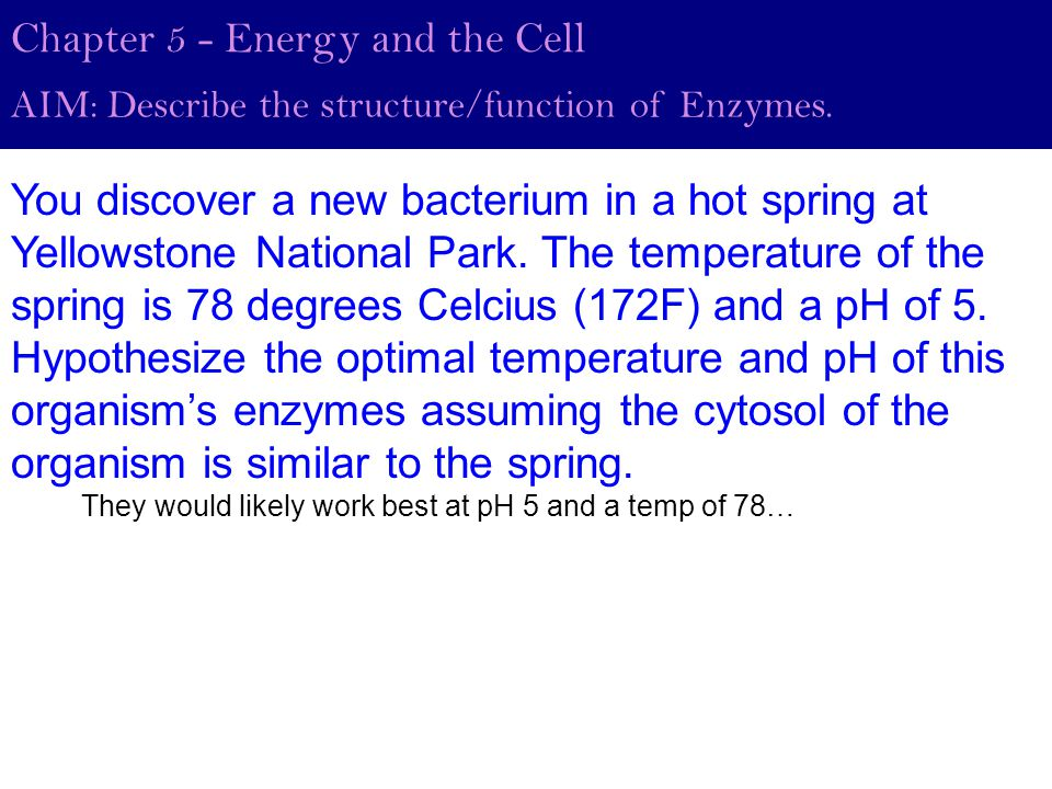 Chapter 5 - Energy and the Cell AIM: Describe the structure/function of Enzymes.