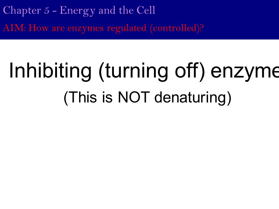 Chapter 5 - Energy and the Cell AIM: How are enzymes regulated (controlled).