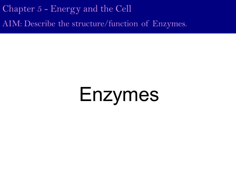 Chapter 5 - Energy and the Cell AIM: Describe the structure/function of Enzymes. Enzymes