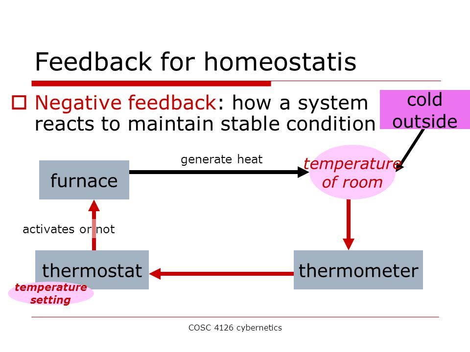 COSC 4126 cybernetics cold outside Feedback for homeostatis  Negative feedback: how a system reacts to maintain stable condition furnace generate heat temperature of room thermometerthermostat activates or not temperature setting