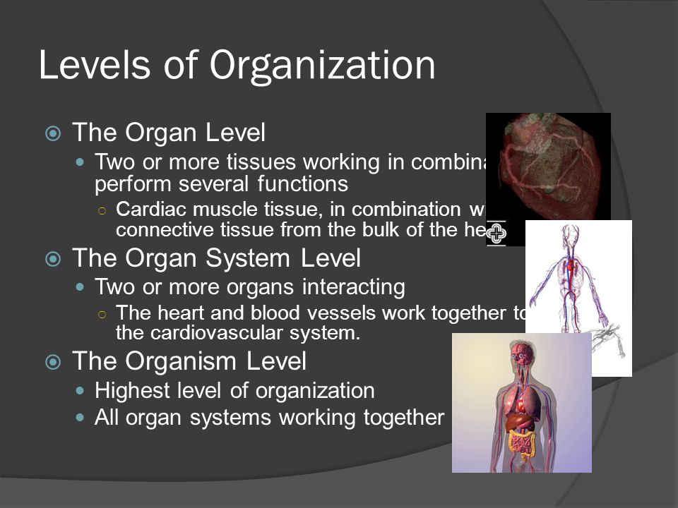 Levels of Organization  The Organ Level Two or more tissues working in combination to perform several functions ○ Cardiac muscle tissue, in combination with connective tissue from the bulk of the heart.