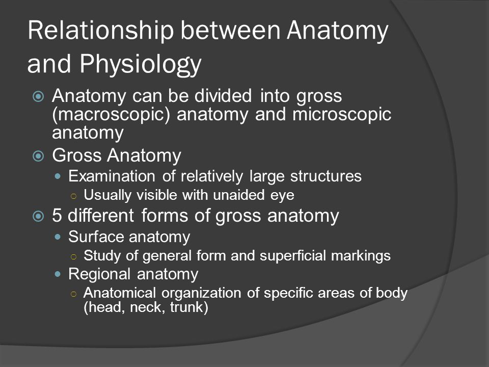 Relationship between Anatomy and Physiology  Anatomy can be divided into gross (macroscopic) anatomy and microscopic anatomy  Gross Anatomy Examination of relatively large structures ○ Usually visible with unaided eye  5 different forms of gross anatomy Surface anatomy ○ Study of general form and superficial markings Regional anatomy ○ Anatomical organization of specific areas of body (head, neck, trunk)