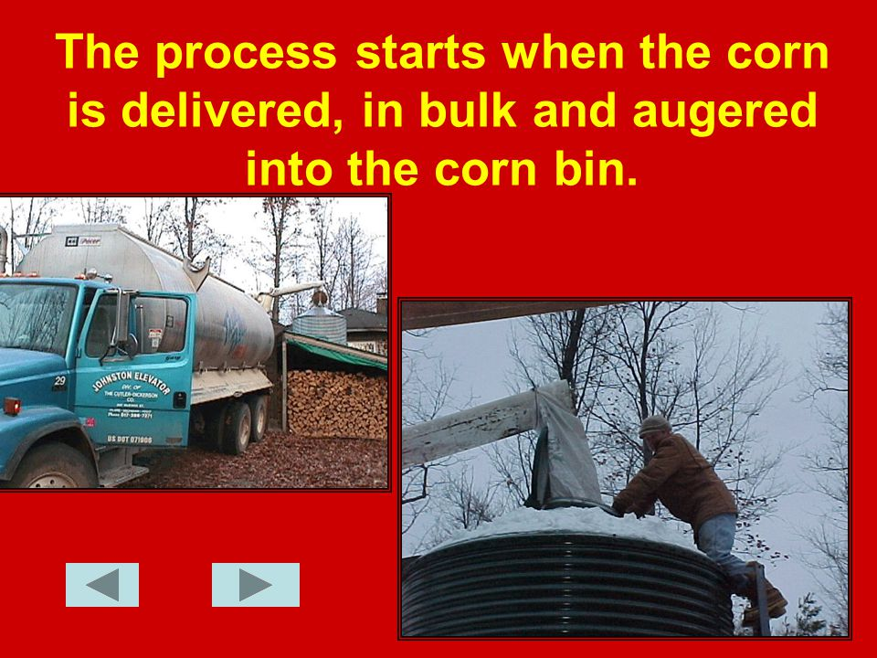 The process starts when the corn is delivered, in bulk and augered into the corn bin.