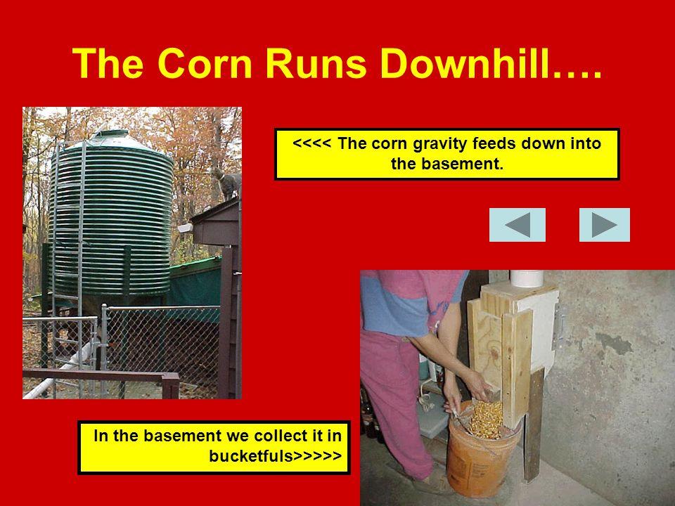 The Corn Runs Downhill…. <<<< The corn gravity feeds down into the basement.