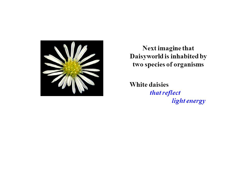 Next imagine that Daisyworld is inhabited by two species of organisms White daisies that reflect light energy