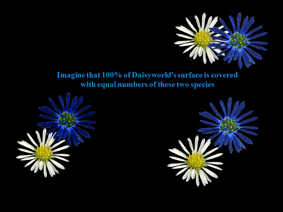Imagine that 100% of Daisyworld s surface is covered with equal numbers of these two species